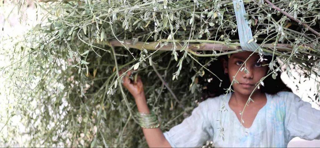 Børnearbejde i udviklingslande: Ulandssekretariatet